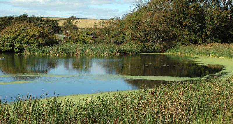 Farm pond_16038