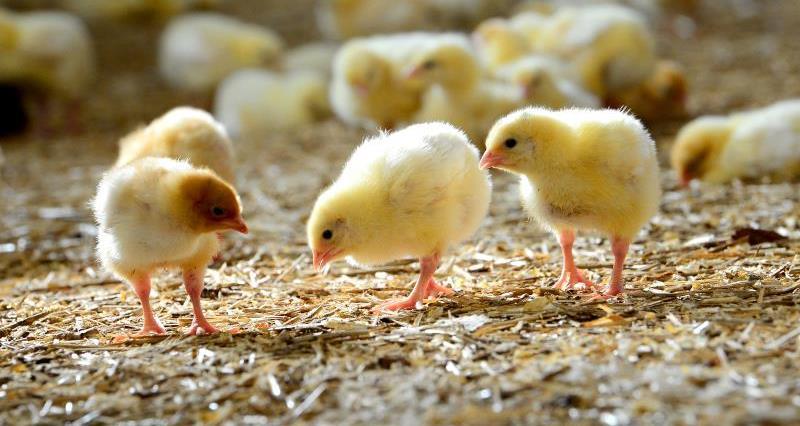 Frogmary Farm_21782