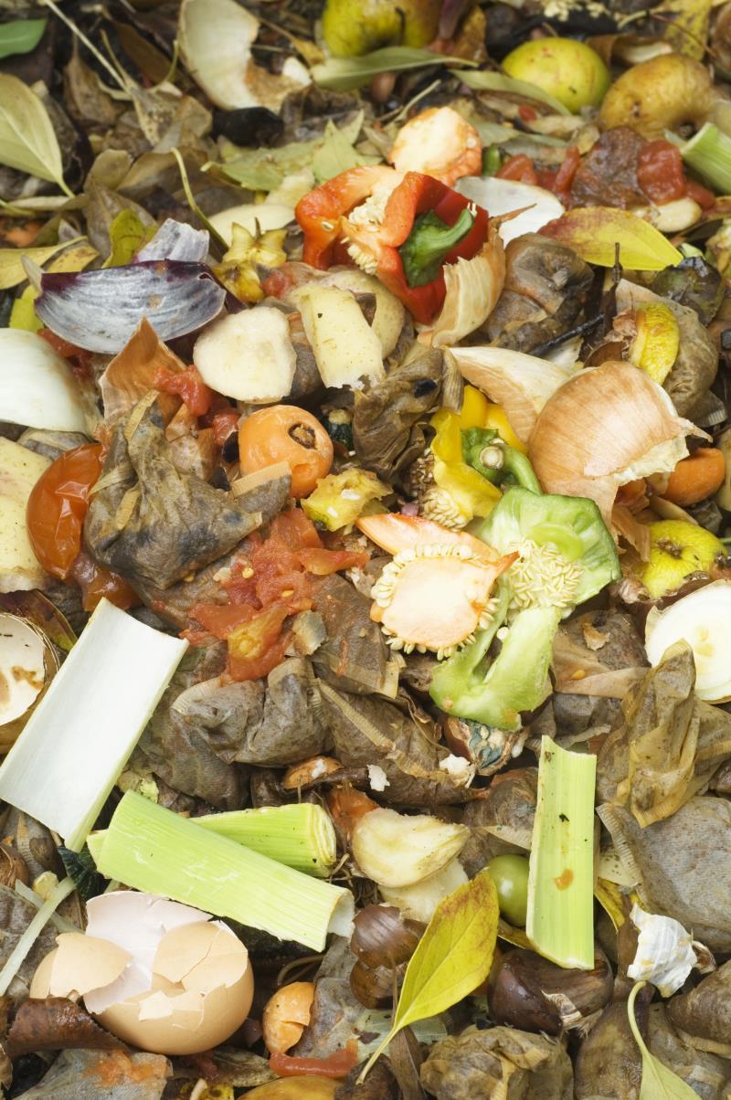 Compost heap_18514