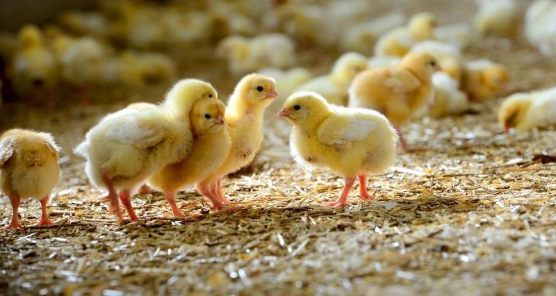 Frogmary Farm_21781