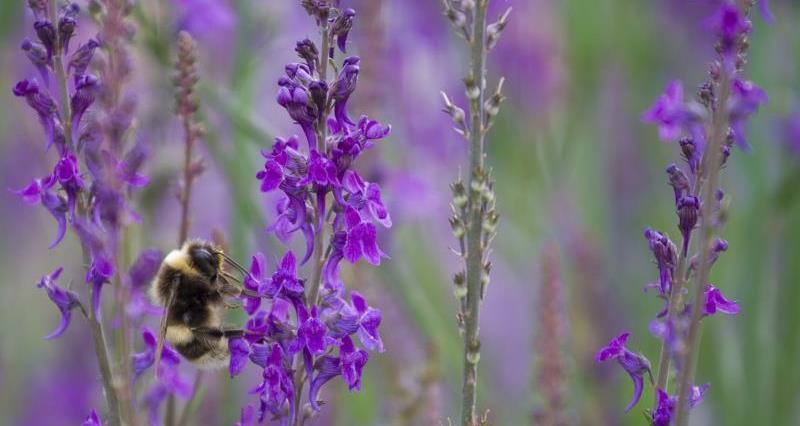 Bee feeding_19274