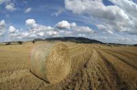 Hay bales in wheatfield_13128
