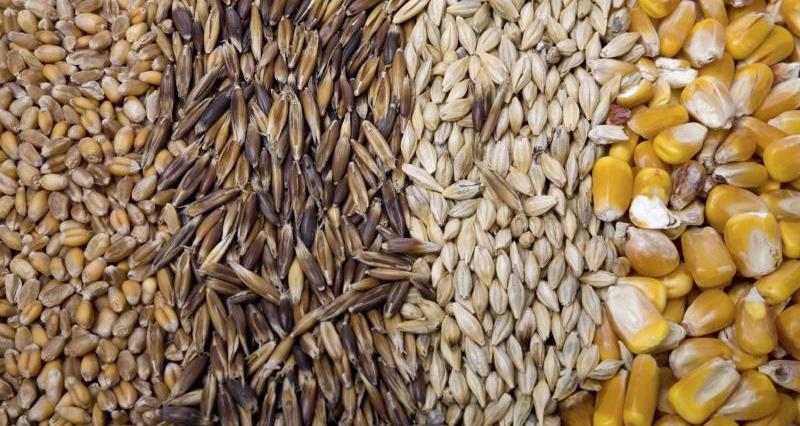 Cereals and grains_7795