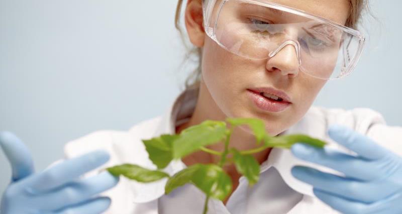Scientist examining plant_12671