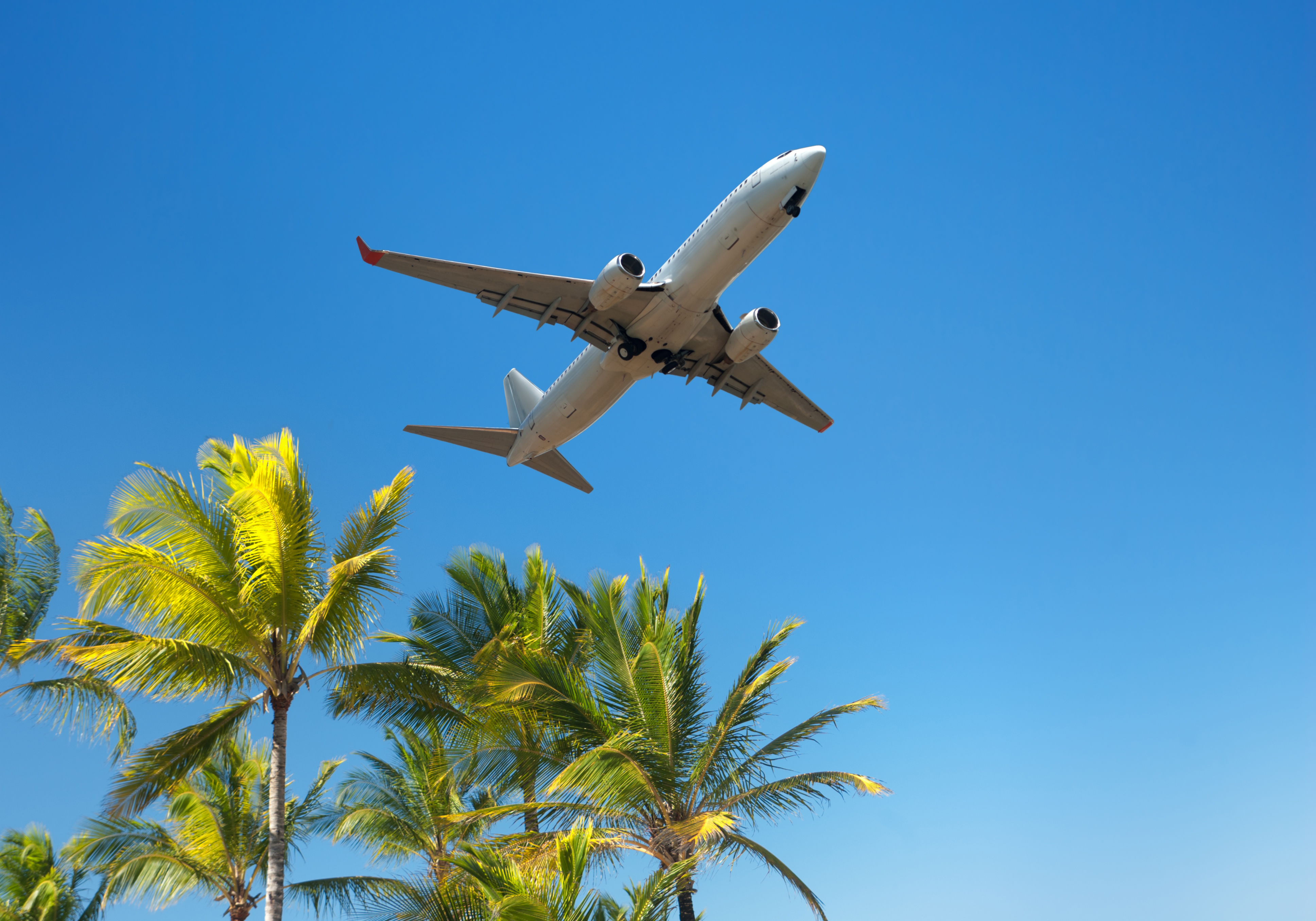 Plane flying over palm trees_11780