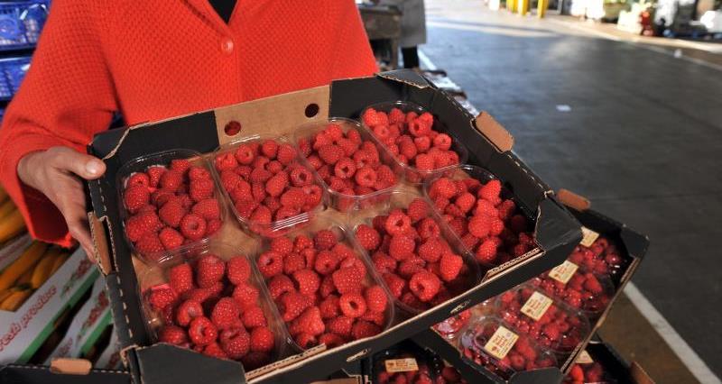 Very Berry Farm_19346