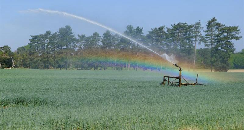 Environment Agency publishes revised irrigation prospects for 2020
