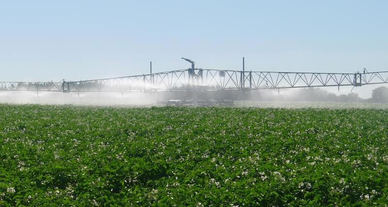 Irrigation advice for potato growers in Cambridgeshire