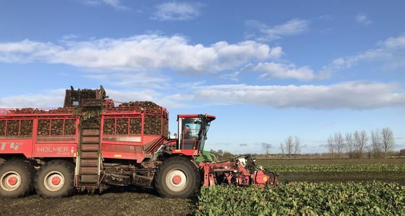 Beet Harvester_49665