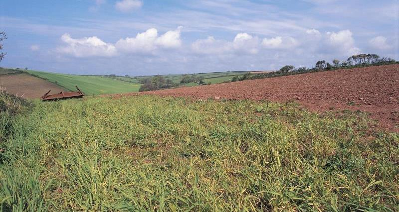 Cultivated margins
