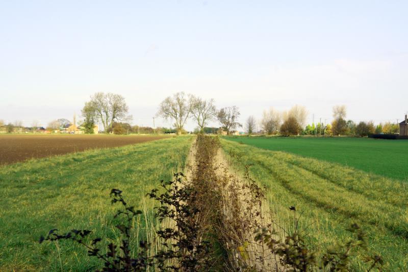 In-field grass strips to avoid erosion