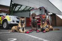 West Midlands Fire Dogs - CS Feature - only use in this context_37918