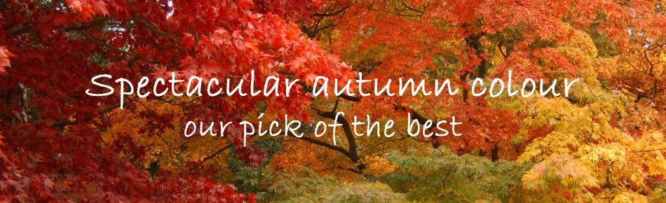Autumn scroller_24885