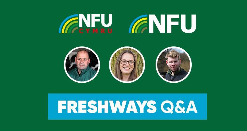 Video: Your dairy team talk all things Freshways