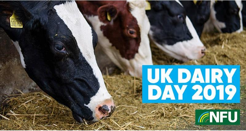 Your dairy questions answered at UK Dairy Day