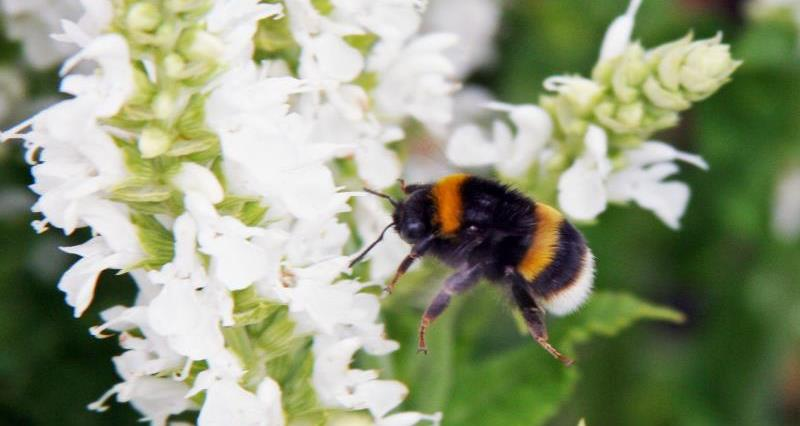 Bees and neonicotinoids - what's it all about?