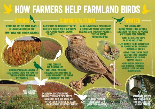 How farmers help farmland birds_30623