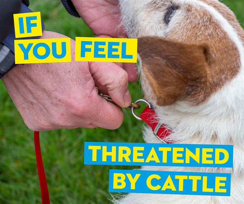 If you feel threatened by cattle release your dog social media_65411