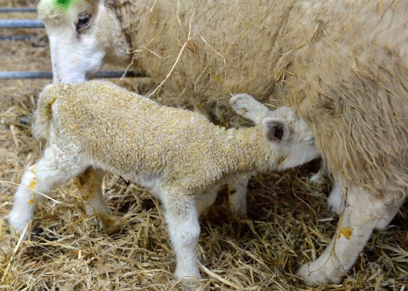 Seven Sisters Sheep Centre_33444