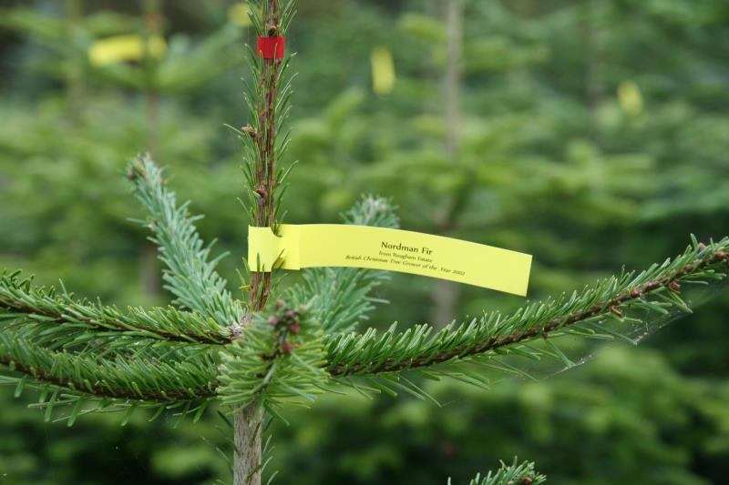 Rougham Estate Trees_11506