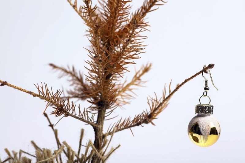 Dead christmas tree_31583