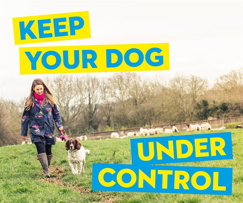 Keep your dog under control social media_65407