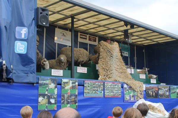 The Sheep Show_23351