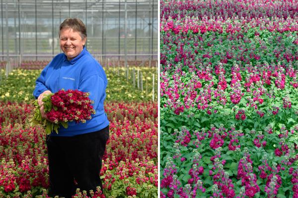 Sue Lamb flowers_33438