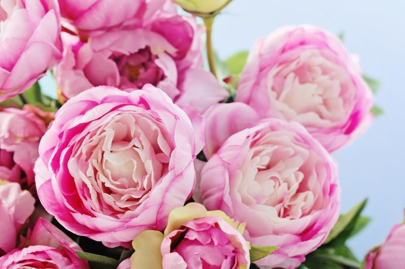 Countryside online peony_41075