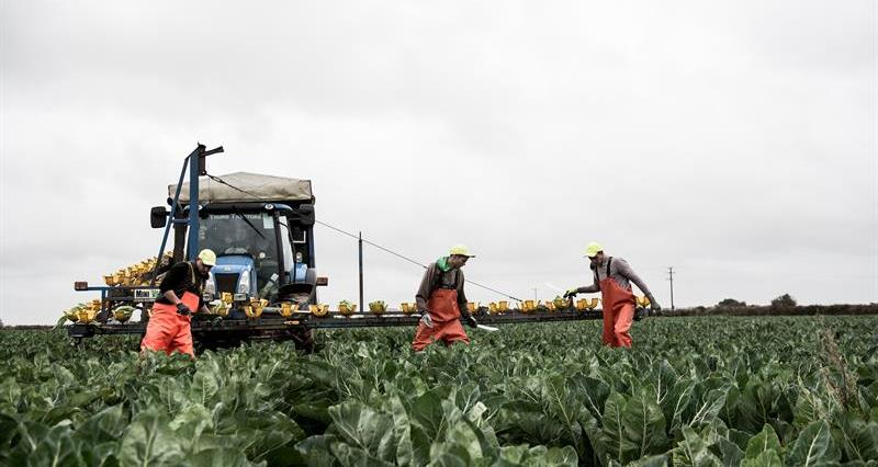 How the EU Settlement Scheme can secure workers beyond 2020