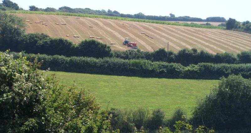 Countryside at Carisbrooke, Isle of Wight_42613