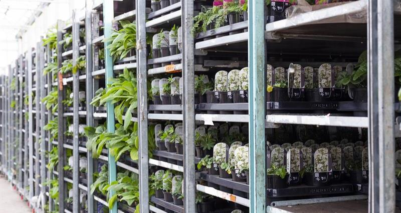 'Lifeline' for plant and flower growers as garden centres set to reopen