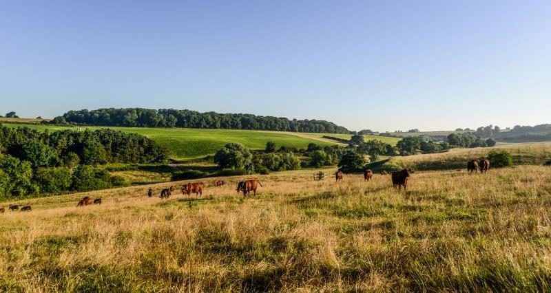 Farming landscape cattle_47805