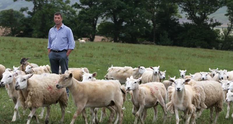Richard Findlay on farm July 2018_55358