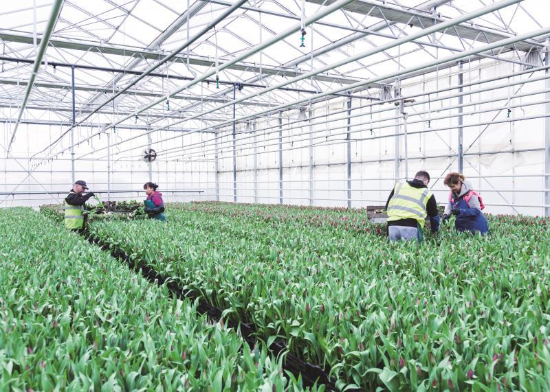Horticulture workers Belmont Nurseries_53459