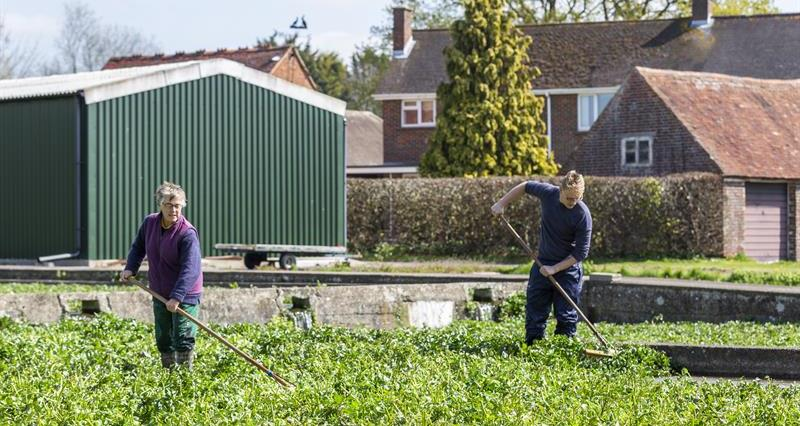 Workers at Hairspring Watercress farm_66560