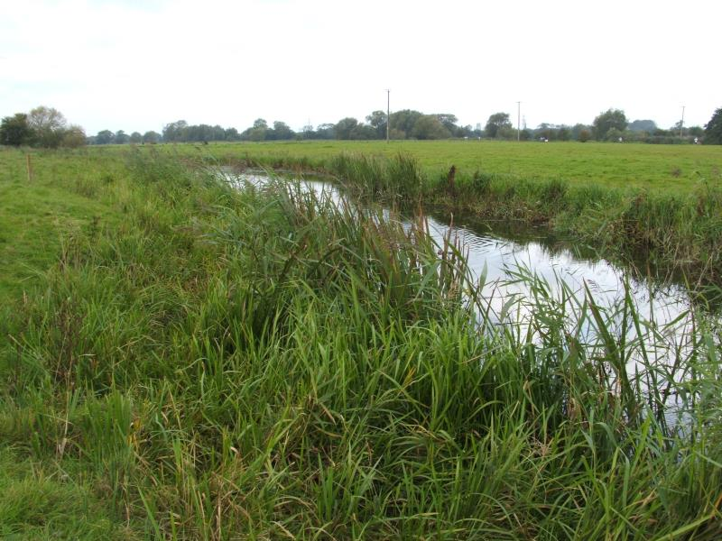 Create a network of rough grassland and grass margins