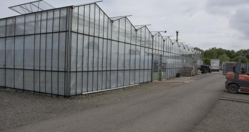 Glasshouse at nursery_35534