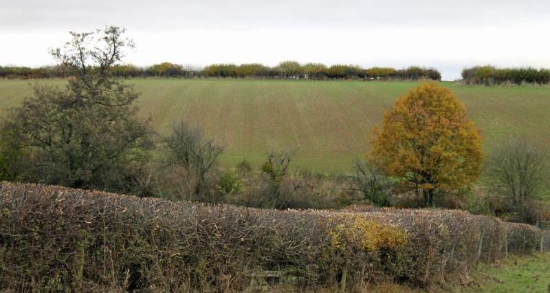 Managing hedgerows for carbon storage