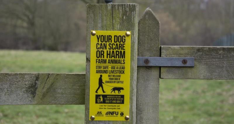 Dog Walking Sign 2015_27364
