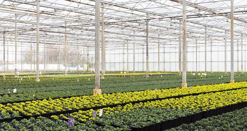 Email your MP: Support for the ornamentals sector