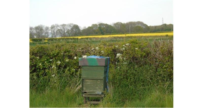 James Cox Farm_43752