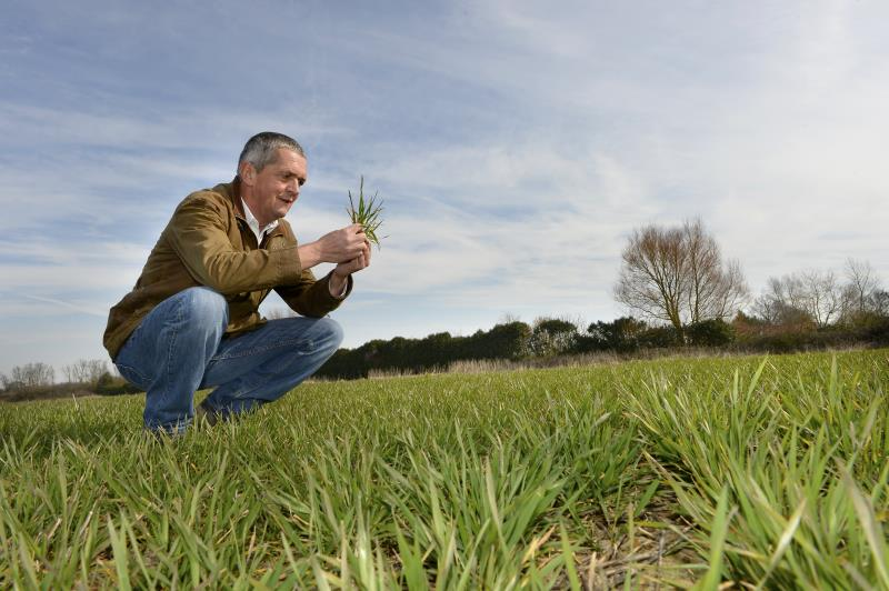 Guy Smith inspecting grass_27807