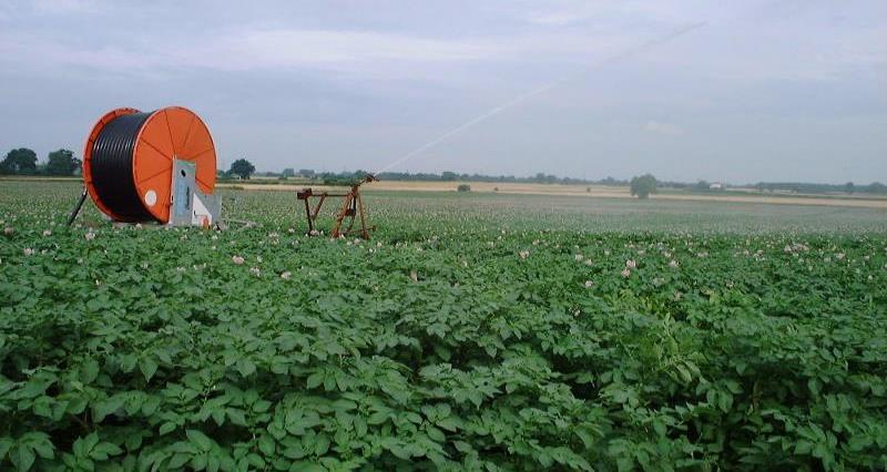 Potatoes irrigation_42271