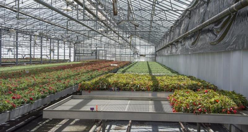 Glasshouse growers and business rates
