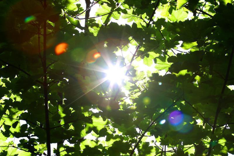 Light through leaves_44293