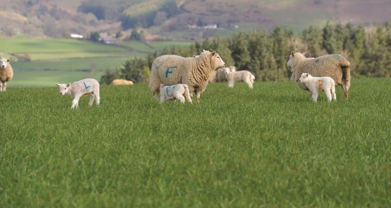 NFU Cymru responds to publication of 'No-deal' import tariff schedule