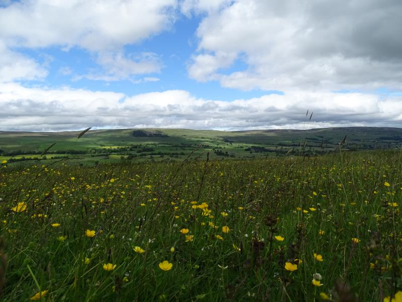 Environmental delivery in the Yorkshire Dales_56590