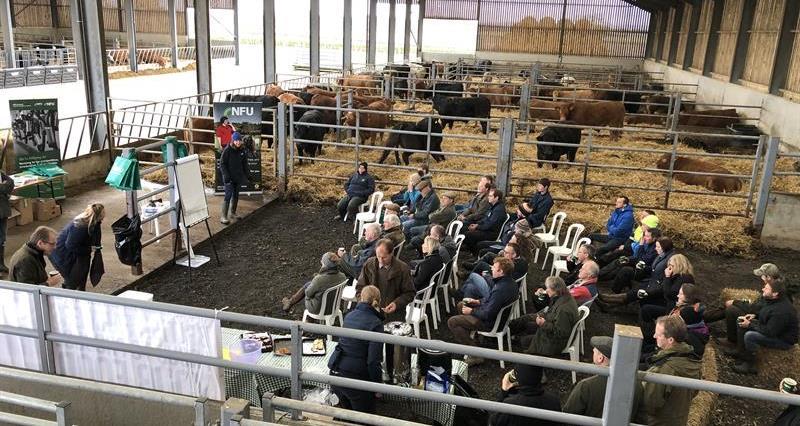 Cattle handling event_70244