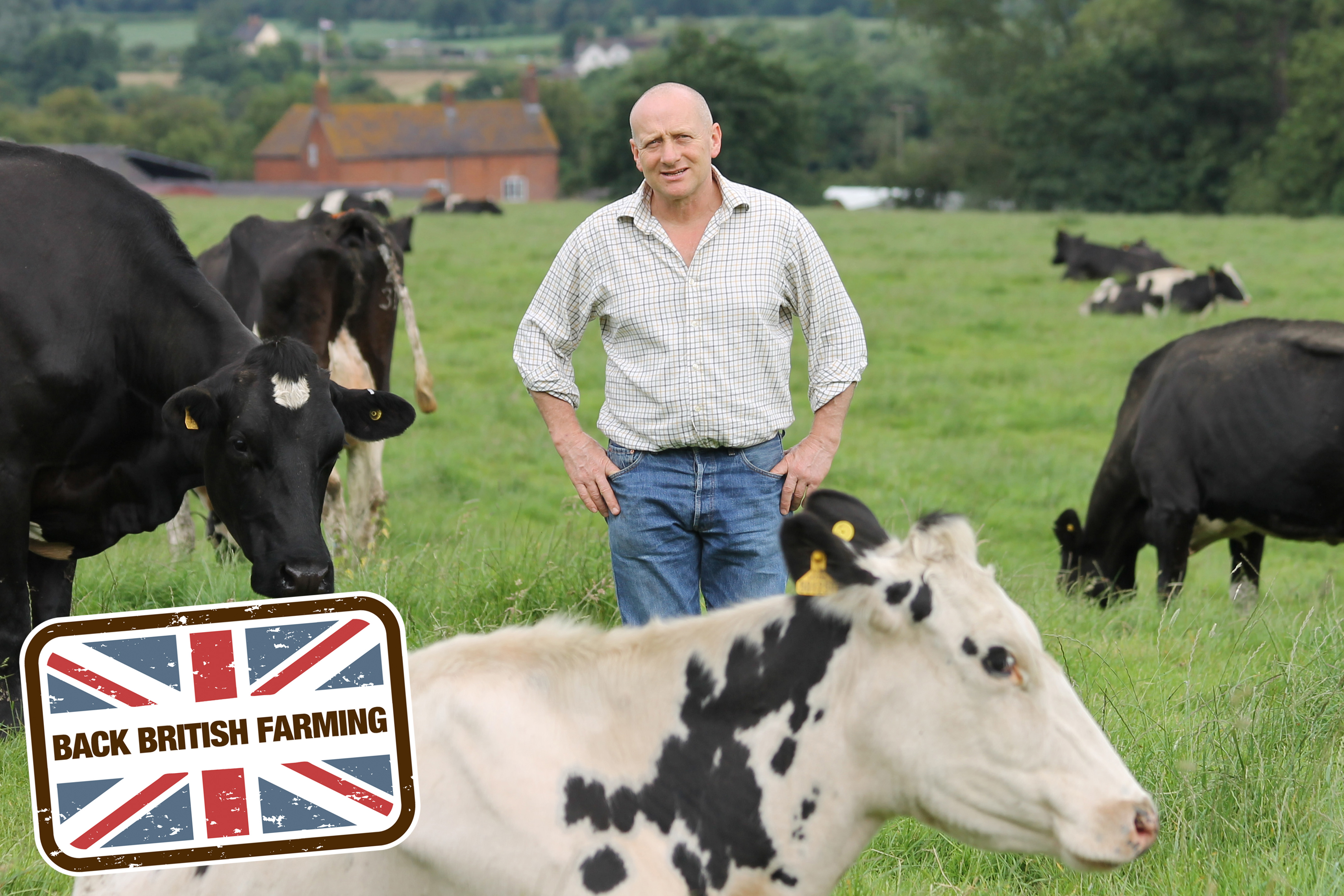 david brookes dairy farm case study